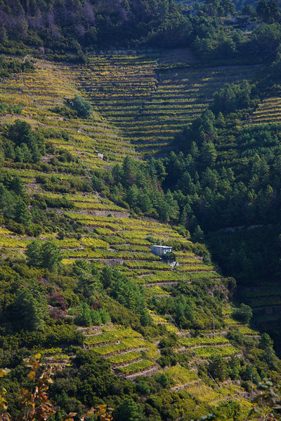 Across the valley, workers were harvesting grapes in the terraced vineyards.