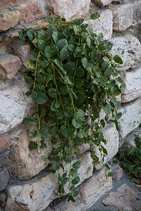 Tuscany Wall