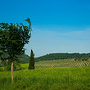 Countryside, Tuscany, Italy