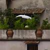 Honeymoon in Italy 137