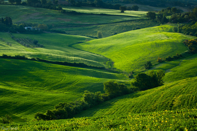Morning on coutryside, San Quirico d´Orcia, Tuscany, Italy