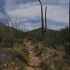 Kings Canyon Trail