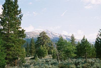 7/5/05 Near entrance to Lower Twin Lakes Campground. Toiyabe National Forest, Eastern Sierras, Mono County, CA