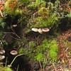 Wee stuff growing on stumps.