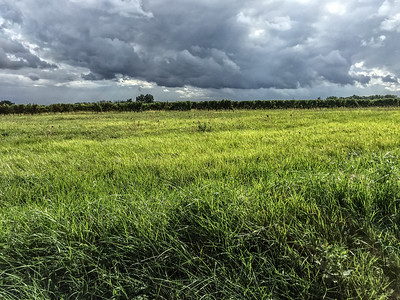 Clouds and grass