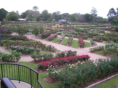 Tyler TX Rose Garden