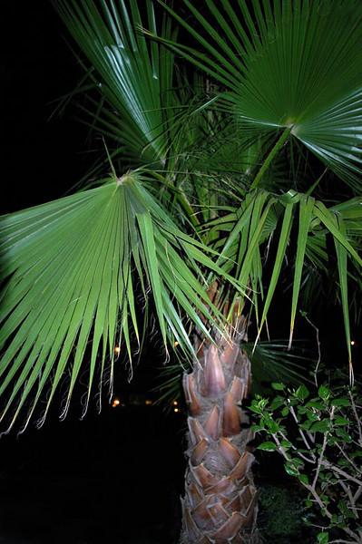 Palmesus