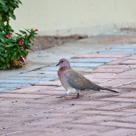 Birds in Ras Al Khaimah