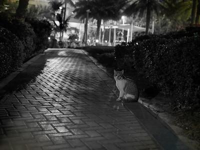The Cats around