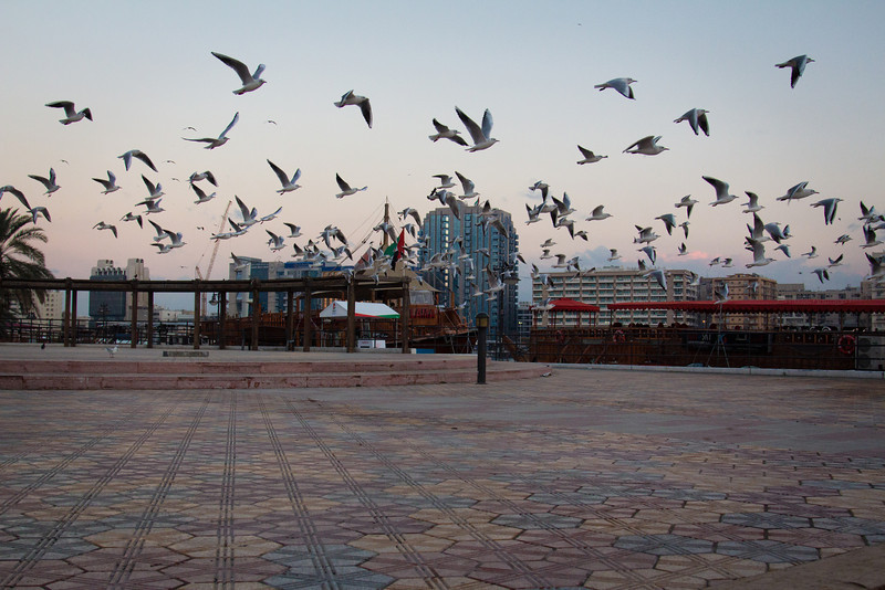 Sea gulls in Dubai