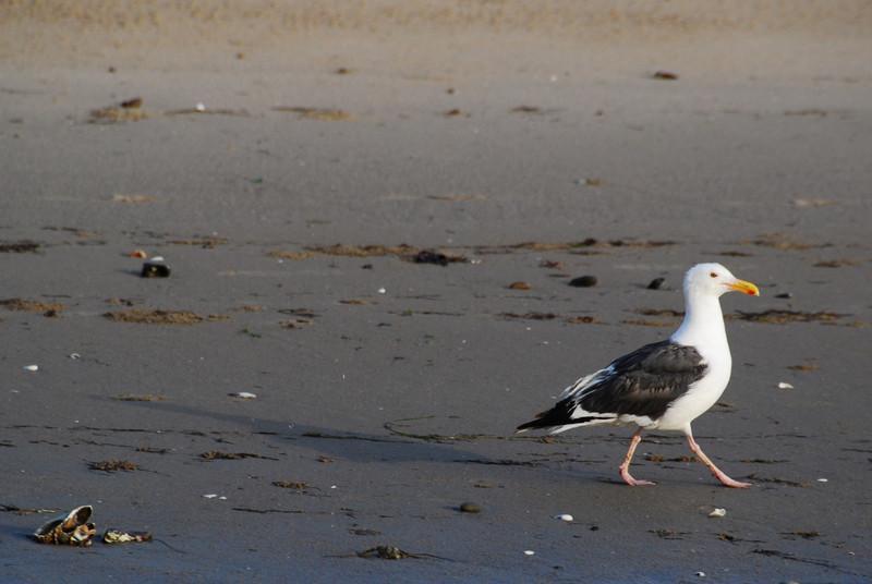 Seagull strutting his stuff
