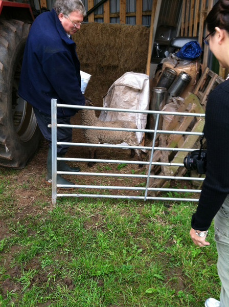4 July 2012: This sheep stays on his own. He's a little oppressed.