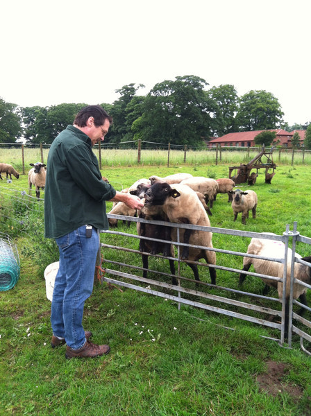 4 July 2012: We stayed at The Old Rectory Farm outside Nottingham for one night. In the morning, Patrick fed the sheep some bread.