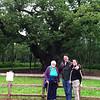 4 July 2012: The Major Oak in Sherwood Forest