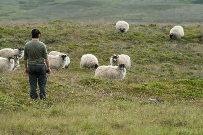 5 July 2012: Later, he said he was trying to herd them toward me.