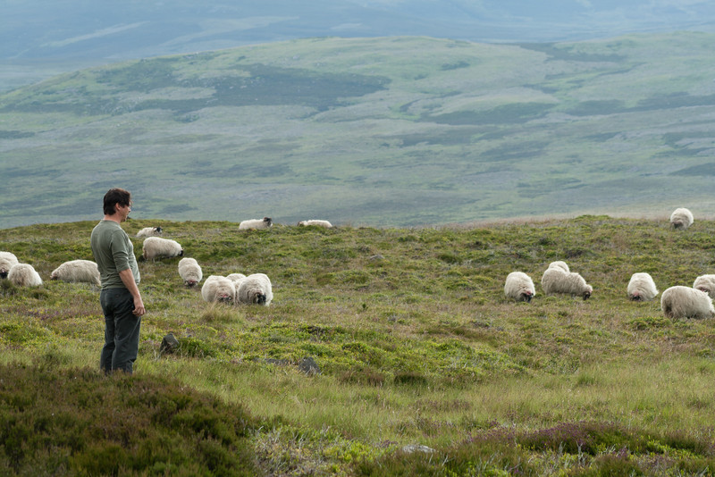 5 July 2012: Patrick attempting some sheep whispering. I had pulled over somewhere in Scotland where I saw sheep near the road and no fence holding them in. We stood around in the heather for awhile as they ate and looked dubiously at us.