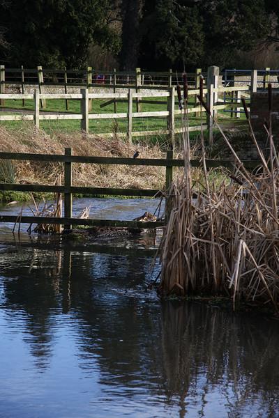 Kingfisher on fence