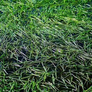 Flooded Grassland, Test Valley
