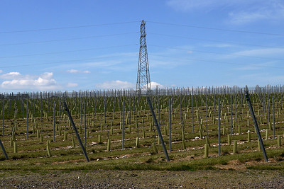 Agri-vinyard No 4006/23D. Climate change in action. Wonder if the pylon adds to the terroir