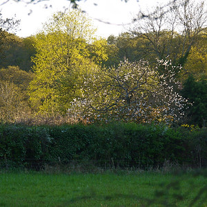 Orchard Remnants, Penn Common, New Forest