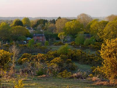 Stagbury Hill evening light