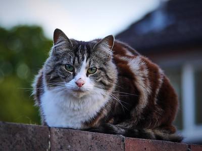 Gerald the Cat