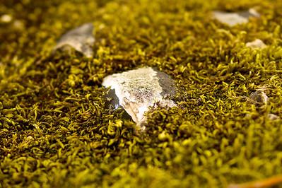 Flint in Moss