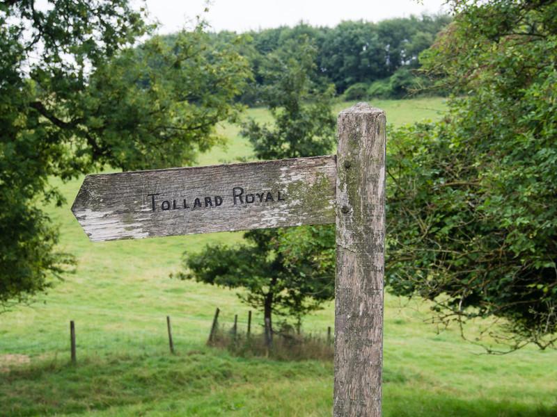 This way to Tollard Royal