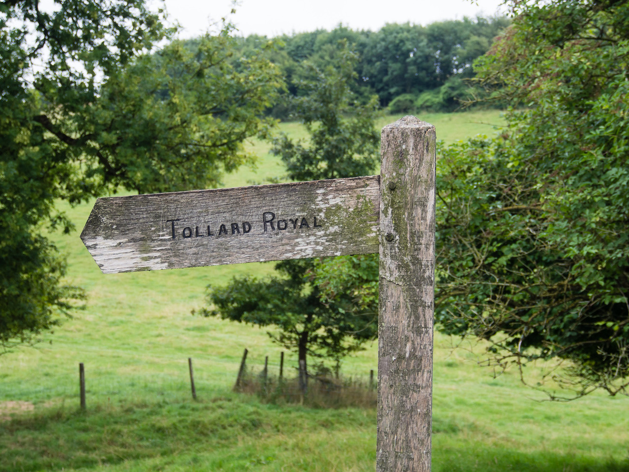 This way to Tollard Royal