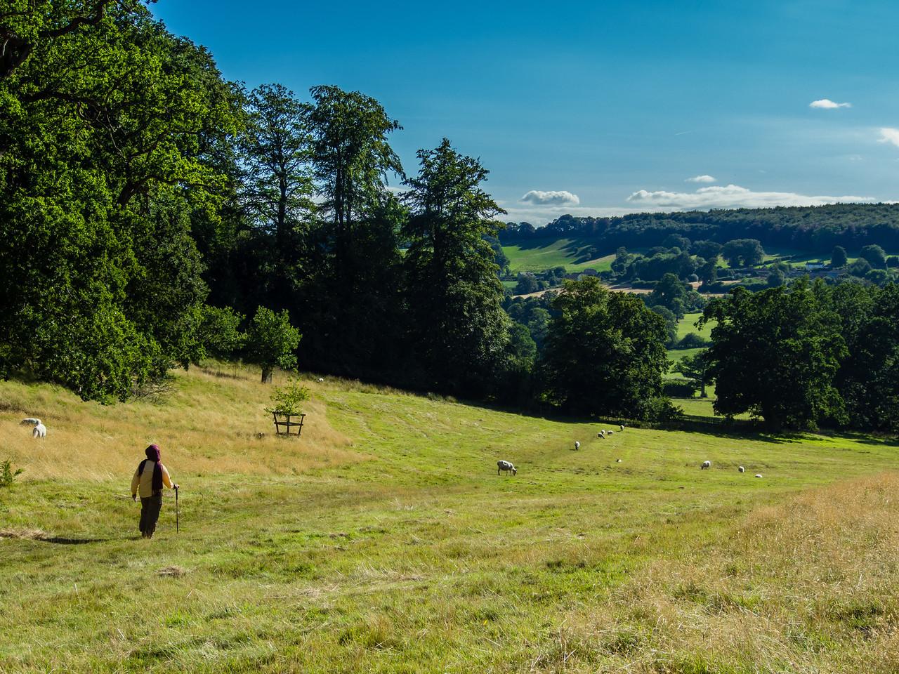Walking through the pasture