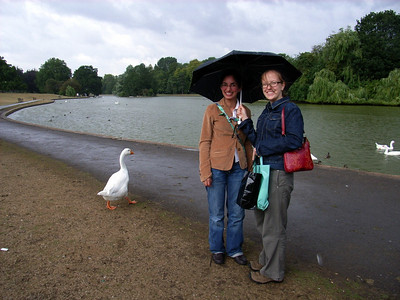 ...and of course it wouldn't be England without a bit of rain...and some geese!