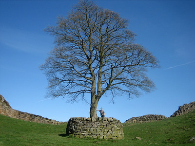 Tobias at Sycamore Gap, under the very tree where Kevin Costner took a break in Robin Hood: Prince of Thieves!