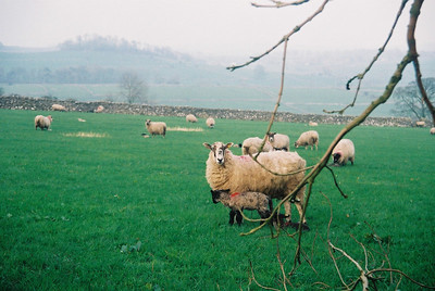 We were in the Peaks district just after lambing season, so there were lots of cute lambs.