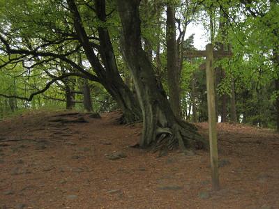 Beech trees in Gradbach wood