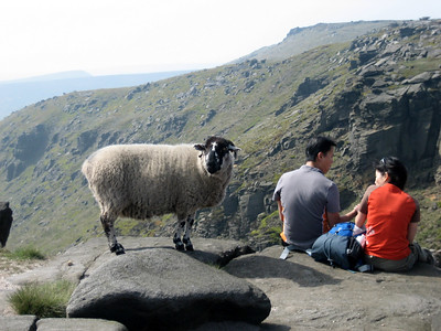 This sheep was indignant about this Asian couple who stole her favourite spot. Either that or she wanted a bite of their sandwich.