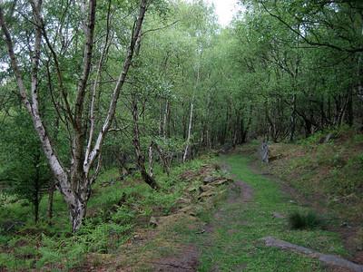 forest near Froggatt