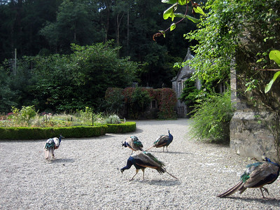 Gardens of Gwydir Castle
