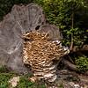 Bracket Fungus on felled tree