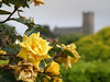 Rose and Church, Stranraer, Scotland