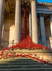 Poppy Installation at St. Georges Hall, Liverpool