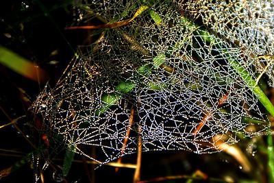 Cobweb glittering in the sun