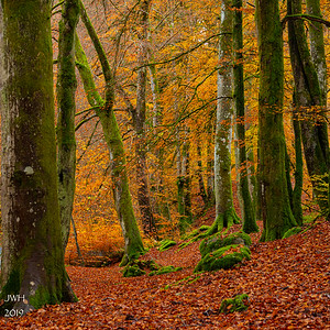 Moss 'n birch