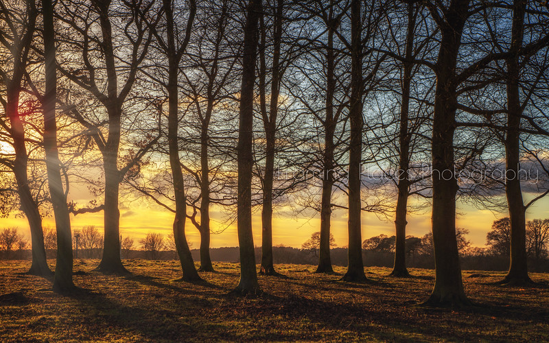 Ampthill Great Park Trees