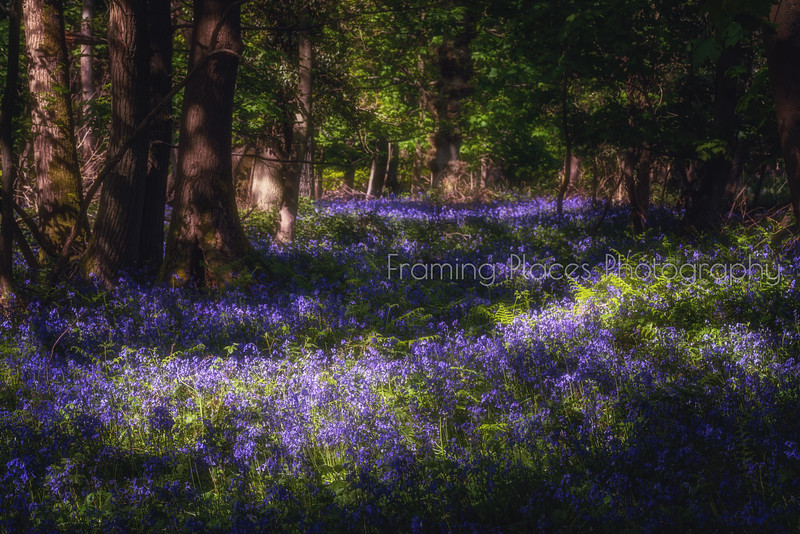 Bluebell Stream