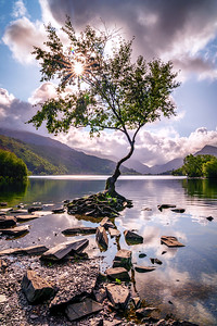 Lone Tree of Llanberis, Snowdonia