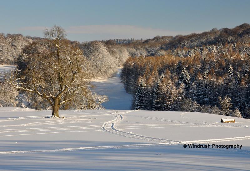 Snow 043
