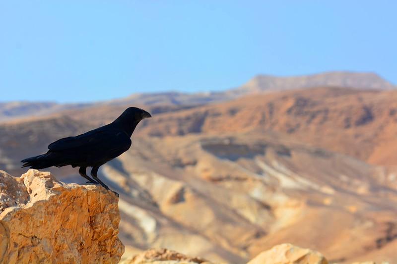 Masada, Israel #1040