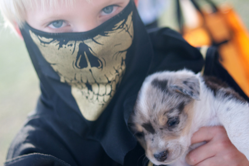 Ninjas, apparently, love puppies.  In a very serious kind of way.