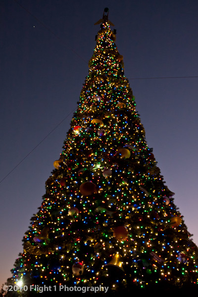Holiday tree at night