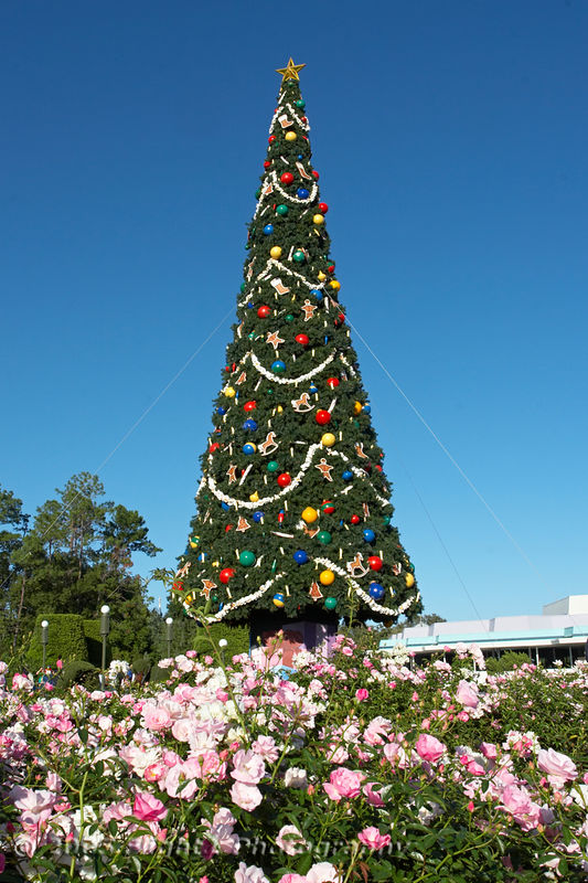 The Magic Kingdom Christmas Tree